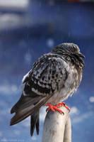 bleh bird by AnnaGiladi