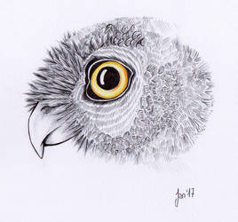 Owl by notanegyptianspirit