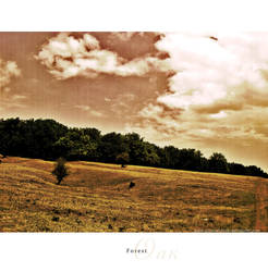 Oak Forest by ellymarinova