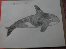 NA's Cordelia by CalliesKennel