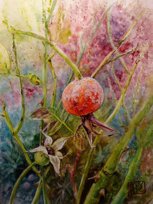 Wild Rose by Kotwinka