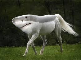 Shark Horse by textme0009