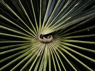 Palm Leaf by UssjTrunks