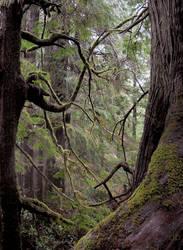 Tree Marriage by FeetAreNeat