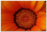Orange Detail by HogRider