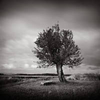 The old tree by ThierryV