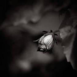 Lost in garden by ThierryV