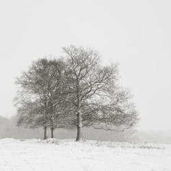 Snowy trees by ThierryV