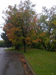 fall tree by thegreatbobinsky