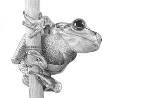 Frog by Ilojleen