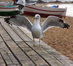 Seagull Gaviota by RafaelloSimonic