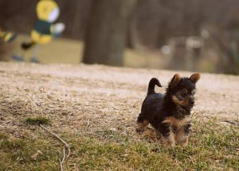 Purse Dog by madscott