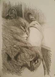 Cat on my lap  by pingvinkatt