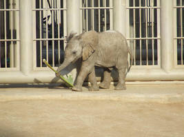 Baby Elephant 4 by dtf-stock
