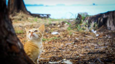 A Cute Kitten Behind Tree by chiiratiramisu