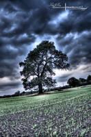 HDR Old Oak Tree. by ElementaryDearWatson