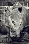 Rhinoceros by ElementaryDearWatson