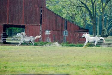 Horses by Kimikatt19