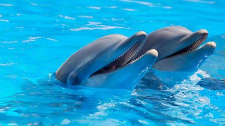 Dolphin by Kimikatt19