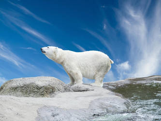 Polar Bear by Kimikatt19