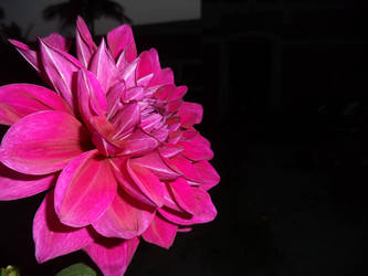 A Flower by Ayon-Azad