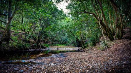 Creek by nitrolx
