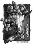 Cow Skull Rose by AltroEvo
