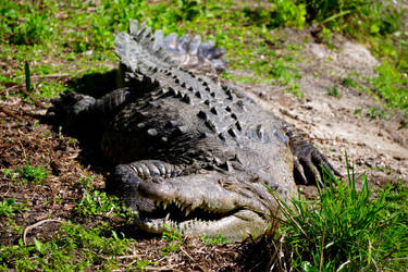 Croc Teeth by SilkenWinds