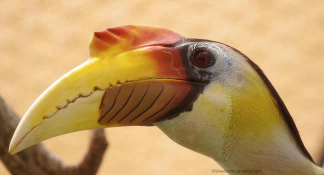 Portrait of a Hornbill by SilkenWinds