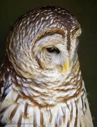 Owl Statue by SilkenWinds