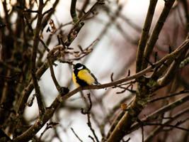 bird by Ernie-e