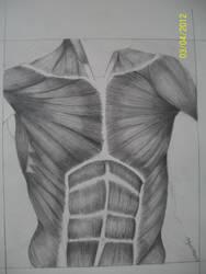 Chest Muscles Drawing by ItoeKobayashi