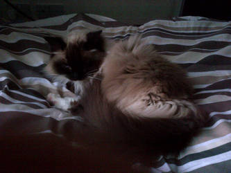 Night time kitty by sailormoonangel22