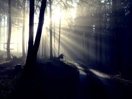 A Foggy Day III by wosicz