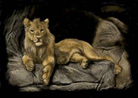 First Digi Realistic Lion by ArtistMaz