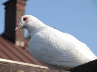 white bird by Dreit