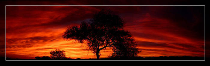 Fiery Mesquite Sunset by Delusionist