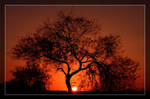 Mesquite Tree Sunset by Delusionist