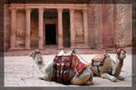 Camel's in Petra Jordan by Delusionist