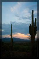 Estrella Cactus Sunsets - 1 by Delusionist