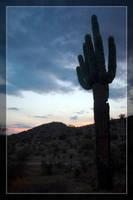 Estrella Cactus Sunsets - 2 by Delusionist
