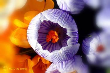 springtime1 by endrju2GO