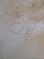 Orchid Contour Drawing by glubglubglubb