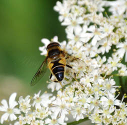Bee by AngelasPortraits