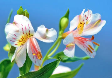 Scent of Spring by SARETTA1