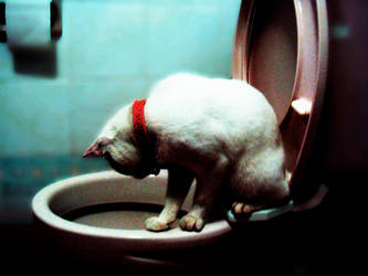 curiosity kills the cat- by sagethewinger