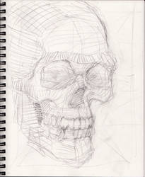 Skull Sketch Aug 2018 by myconius