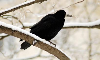 winter by JabinQuaken