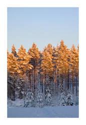 Sunlit trees by Lidodido
