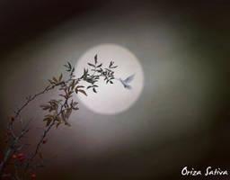 At Night by borobudur82